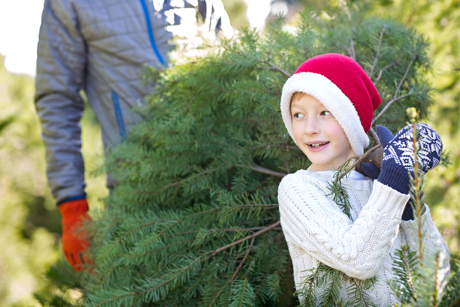 What to Know Before Visiting a Christmas Tree Farm