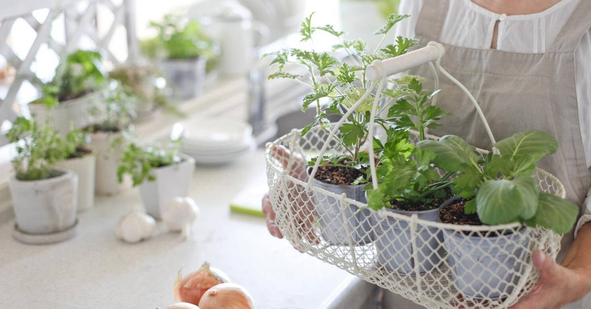 DIY Container Vegetable Gardening at Home